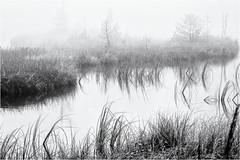 Walking or Swimming... (Ody on the mount) Tags: anlässe em5 landschaft mzuiko6028 nebel omd olympus schilf schwarzwald teich wanderung wasser bw fog landscape mist monochrome sw water gernsbach badenwürttemberg deutschland de