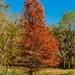 Fall Foliage, Brazos Bend Style