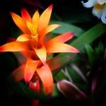 Toronto Ontario - Canada  - Allan Gardens Botanical Gardens - The Most Unique Cacti thumbnail
