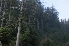 Indian Beach (Tony Pulokas) Tags: indianbeach ecolastatepark cannonbeach oregon tilt blur bokeh autumn fall forest tree spruce sitkaspruce