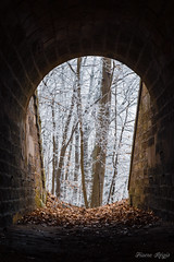 """La lumière au bout du tunnel"" (regisfiacre) Tags: paysage landscape hiver winter givre froid lorraine moselle france nuages clouds nature canon 5div mark iv 4 plein format full frame 24105mm l gris grey blanc white weiss neige snow schnee tunnel lumière light licht feuilles leaves blatt"