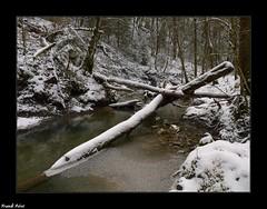 Neige et Glace sur le ruisseau de Château Renaud (francky25) Tags: neige et glace sur le ruisseau de château renaud franchecomté doubs hiver