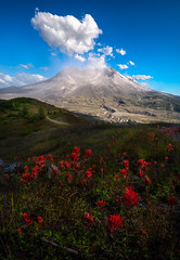 Windy Mt. Saint Helens (AirHaake) Tags: mountain mtsthelens mountsainthelens cloud clouds flowers foreground foregroundflowers washington volcano