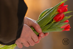 men hands holding a Bouquet red tulips (Geert Weggen) Tags: hand marble adult beauty blossom bouquet boxcontainer business care celebration concentration concepts conceptstopics dark day decoration flat flower freshness gift greeting holidayevent homedecor horizontal humanbodypart humanhand invitation loveemotion nature people photography pinkcolor plant red retail romance russia rustic sale springtime surprise table textured tulip vacations valentinesdayholiday women men geert weggen ragunda sweden bispgården jämtland