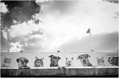 All Pets Go To Heaven (Steve Lundqvist) Tags: ponte sky open bridge pet dog cat cats dogs animali cane gatto gatti cani advertising pubblicita allaperto cielo