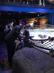 "2018-03-24-to-30-minnesotta-to-see-adam-and-sara-curl-with-family-aquarium-4_31076038718_o • <a style=""font-size:0.8em;"" href=""http://www.flickr.com/photos/109120354@N07/32346458918/"" target=""_blank"">View on Flickr</a>"