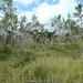 2011-12-31 TEC-0067 Lowland Pine Savanna - E.P. Mallory