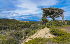 At the cliff... / У обрыва... (Vladimir Zhdanov) Tags: travel argentina tierradelfuego nature landscape mountains mountainside tree sky cloud grass