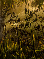 The Jungle in the Dunes (Steve Taylor (Photography)) Tags: brown green yellow newzealand nz southisland canterbury christchurch dunes flax grass cabbagetree autumn dawn sunrise sunshine sunny southnewbrighton