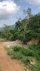 Thenmala reserve forest - Scene from Kollam Shenkottai train (kerala, India) (Mathew Samjee Thomas) Tags: railway railroad india kerala border tamilnadu kottarakara punalur rail train forest thenmala shenkottai kollam