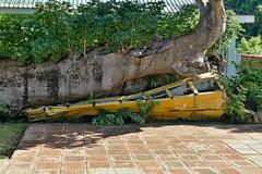 P1000509a (oberbayer) Tags: roseau dominica karibik botanical garden
