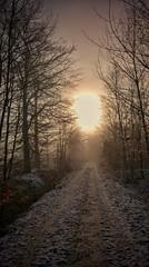Backlight (catha.li) Tags: lgg4 sweden backlight winter forest forestimages naturewatcher soe