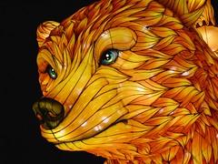 Illuminated bear (Gwenael B) Tags: bear light illuminated paris display eye nikond5200 tamron16300mm lumineux illumine especesilluminees night show