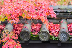Saturated (johnshlau) Tags: saturated redleaves tenjuangarden nanzenjitemple 南禪寺 天授庵 zen autumncolors autumn colors red leaves trees tapped rooftop roof kyoto japan garden temple buddhist serenity peacefulness calmness