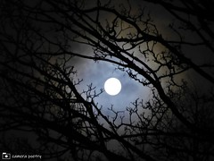 Wolf Moon (camerapoetry) Tags: moon fullmoon january wolfmoon skyscape nightsky trees leafless deciduous clouds manchester england uk nightonearth