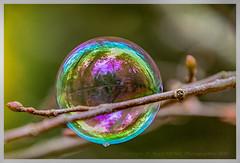 Bulle de savon (regis.muno) Tags: bulle bulledesavon d500 nikond500 nature macro alsace france soap bubble soapbubble