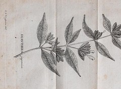This image is taken from Page 22 of Flora Japonica : sistens plantas insvlarvm Japonicarvm secvndvm systema sexvale emendatvm : redaetas ad XX classes, ordines, genera et species : cvm differentiis specificis, synonymis pavcis, descriptionibvs concinnis e (Medical Heritage Library, Inc.) Tags: plant physiology rcplondon ukmhl medicalheritagelibrary europeanlibraries date1784 idb28039725