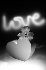 still-life 16-11-2018 005 (swissnature3) Tags: stilllife flowers light macro love
