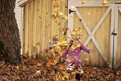 Smileys 2018 (180) (Darien Mejia Chandler in Nashville, TN) Tags: fall familyportraits