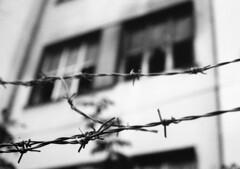 Ruin (Peter Lukáč) Tags: ruin house oldhouse wire barbedwire abandoned bratislava foma fomapan slovakia slovensko urbex