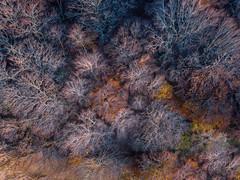 DJI_0562 (Alessandro Censi) Tags: canfaito landscape drone dji mavicpro bosco tramonto sunset alberi goldenhour sanseverinomarche provinciadimacerata italia it