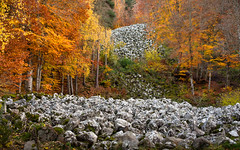 Colorful November (Valérie C) Tags: woods fall november yellow orange green tree forest nature france nikon stones volcano scree auvergne d750