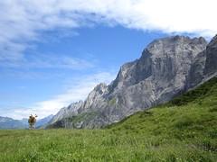 sniffing (Itzlä ° ~~~✈) Tags: grossescheidegg switzerland mountains alps oberland cows animals itzlä 2017 canona2200 clouds sky landscape