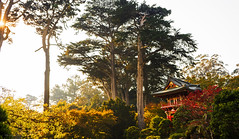 Tea Garden (Krister462) Tags: japanese tea garden golden gate park san francisco trees sun rays yellow green red house sony a7ii 2870mm