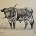 Fort Worth - Longhorn Bull Drawing