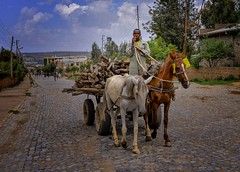 Wood Delivery (Rod Waddington) Tags: africa african afrique afrika äthiopien adigrat ethiopia ethiopian ethnic etiopia ethnicity ethiopie etiopian wood horses cart delivery streetphotography street cobbles houses city outdoor urban