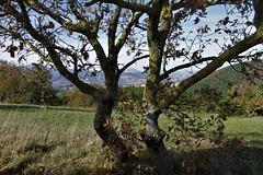dietro - Arcevia (walterino1962 / sempre nomadi) Tags: paesaggio panorama prato montagne colline pendii campicoltivatiearati case paesi città vegetazione alberi arbusti erba rami foglie nubi nuvole luci ombre riflessi arcevia ancona