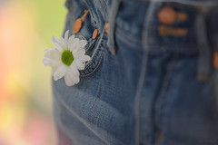 It may be January... (KissThePixel) Tags: denim flower daisy january spring macro bokeh beautiful beautifulday bokehlicious depthoffield dof dofalicious imagination creativephotography stilllife stilllifephotography clothes beauty nikon nikond750 70200mm sigma70200mm sigma f28