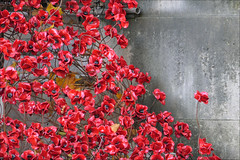 Weeping window (jo92photos) Tags: imperialwarmuseum london poppies artinstallation remembrance weepingwindow cascade red tompiper 15challengeswinner