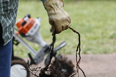 Martha Coleman pauses using her garden tool to remove some roots in her garden.