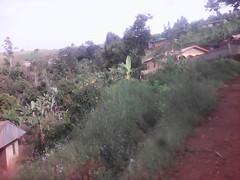 herbe touffe (semowilson) Tags: nature environnement ecologie ecology vegetation verdure vegetaux biodiversite biodiversity biologie biology