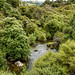 Lush vegetation that helps frame the Pōhutu geyser, Te Puia, Rotoura, NZ