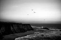 *** (Misha Sokolnikov) Tags: ca halfmoonbay california ocean sunset pacific pacificocean sea beach waves seagull seagulls sky leica leicamonochrom leicamsystem leicamm leicacamera apo aposummicron 50mm