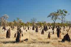 Termite Mounds in Queensland's Gulf Country (Rob Harris Photography) Tags: australia outdoors outback country tourist tourism travel roadtrip nature landscape landscapephotography remote anthills termitemounds queensland northqueensland gulfofcarpentaria gulfcountry bushland savannah sunny bluesky