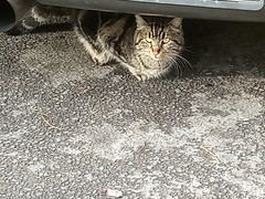 A cat from Athens, Μια γάτα από την Αθήνα, Atinalı bir kedi (sentatopoulos) Tags: kitty cat athens greece hellas kedicik kedi atina yunanistan greek yunan γατάκι γάτα αθήνα ελλάδα ελλάσ xiaomi phone mi6 acharnon street λεωφόροσ αχαρνών κρύοσ καιρόσ cold weather