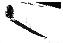 The tree and its long shadow (cienne45) Tags: carlonatale cienne45 natale genoa liguria italy abstract astratto albero tree ombra shadow abstractionism neve astrattismo snow biancoenero bn bw