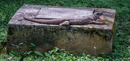 2018 - Mexico - Edzná - Park Iguana