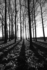 HerbstDonau (MikeSolfrank) Tags: schwarzweis bäume schatten licht park wald einfarig holz donau donauebene wood forest bayern bavaria outside nature light art sky winter