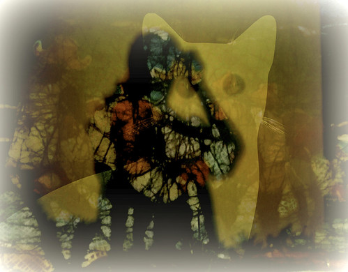 digitalphotography manipulated experimental collage picmonkey face woman cat abstract confront look artchallenge communication
