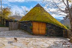 _VMG4798 (V.Maza) Tags: pallozabaltasar pallozas celta mountain naturaleza naturalezaviva castelodedonís cervantes lugo landscape paisaje parquenatural osancares galicia aldeasdegalicia nikon d7100 vicentemaza