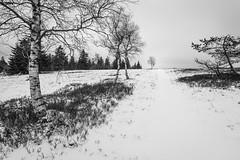 A distant tree (Pascal Riemann) Tags: schnee deutschland baum winter kahlerasten sauerland pflanze sw natur winterberg germany nature schwarzweis snow bw blackandwhite einfarbig monochrome plant
