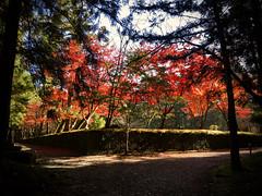 hongu taisha, the original (deziluzija) Tags: autumnleaves hongutaisha koyo oyunohara shrine