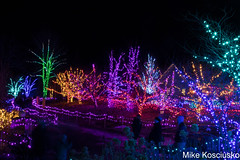 915A6300 (mikekos333) Tags: 2018 december christmas christmaslights coastalmainebotanicalgardens boothbay