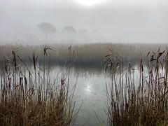 iph8296 (gzammarchi) Tags: italia paesaggio natura ravenna marinaromea piallassabaiona canneto nebbia riflesso lago