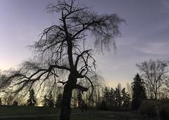 WInter Tree 2 (Mr.LeeCP) Tags: tree winter twilight park