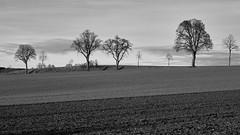 Waldviertel im Winter (richard.kralicek.wien) Tags: blackandwhite waldviertel winter landscape austria